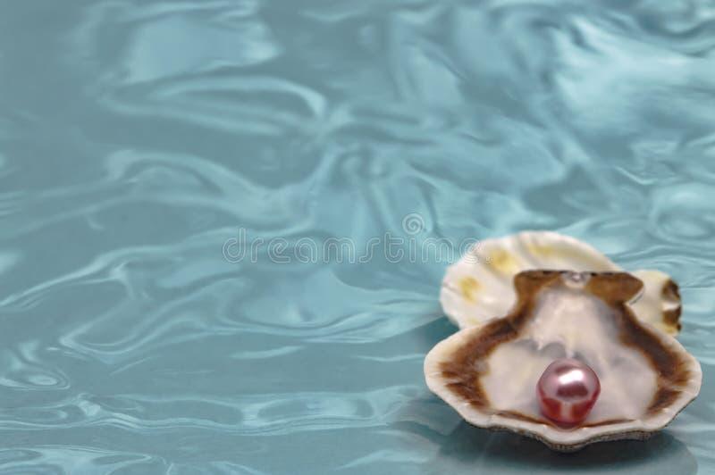 Overzeese shells en roze pareldroom en decoratie dichte omhooggaand royalty-vrije stock foto's