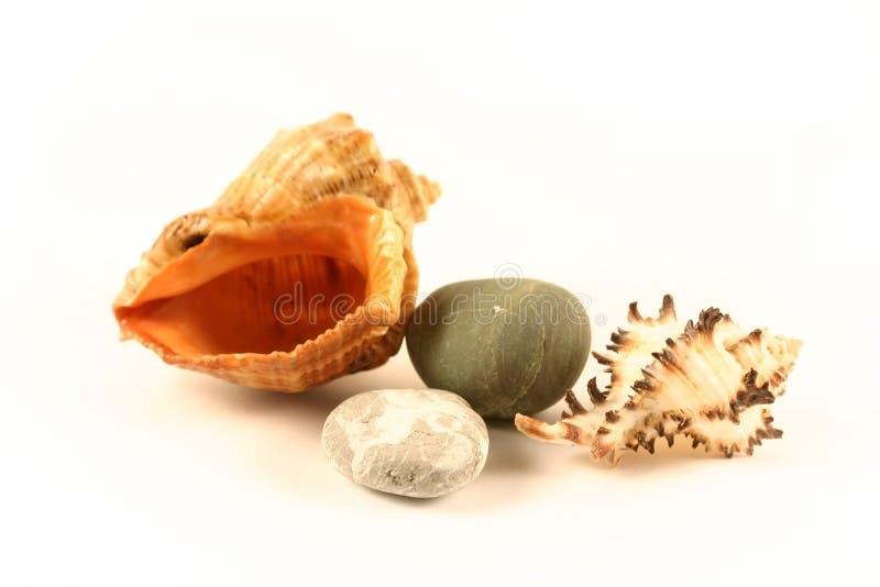 Overzeese shells en stenen royalty-vrije stock afbeelding