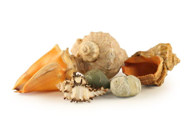 Overzeese shells en stenen stock afbeeldingen