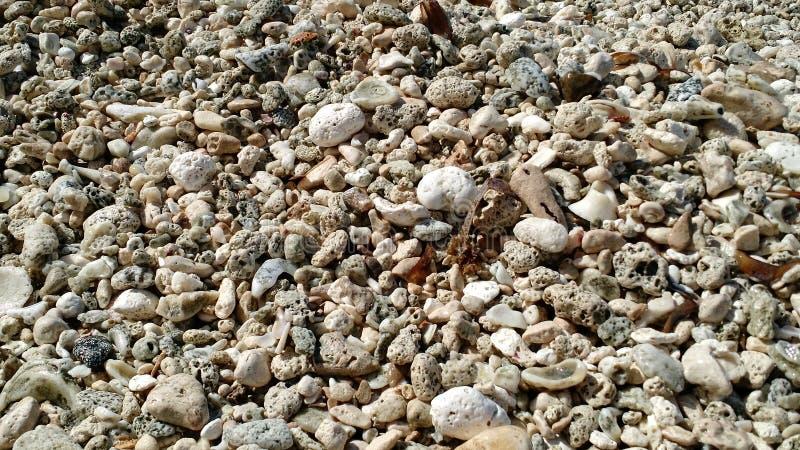 Overzeese shells en stenen in een perfect strand stock foto's