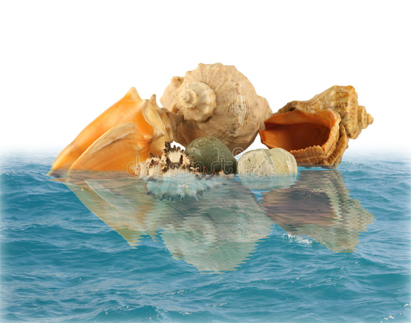 Overzeese shells en stenen in water royalty-vrije stock foto's