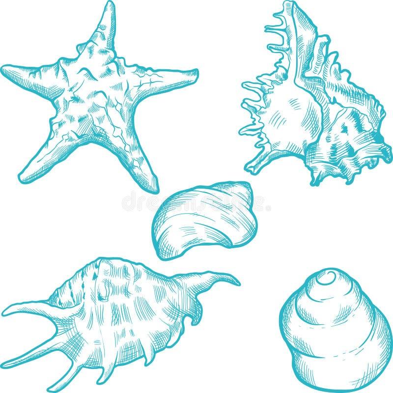 Overzeese shells en ster Hand getrokken illustratie vector illustratie