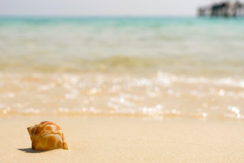 Overzeese shells en zachte golf op het zandige strand royalty-vrije stock afbeeldingen