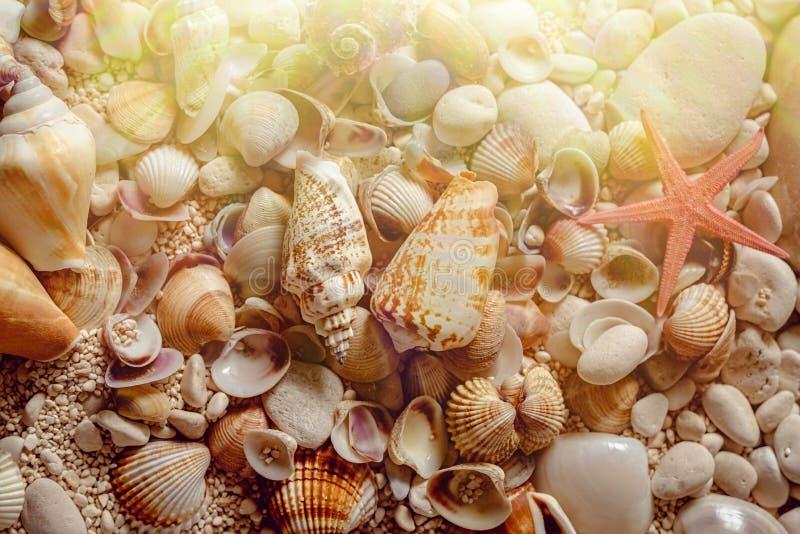 Overzeese shells en zeester op het zand stock afbeelding