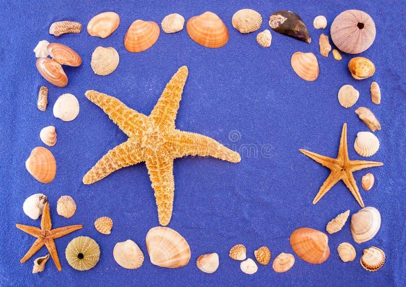 Overzeese shells en zeester stock fotografie
