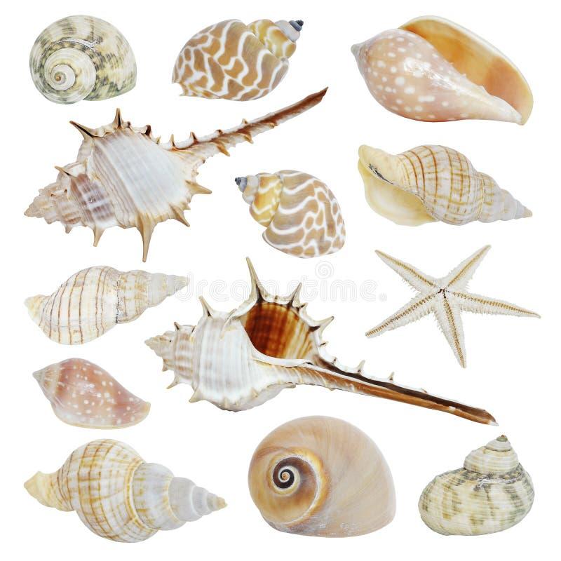 Overzeese shells inzameling stock afbeeldingen