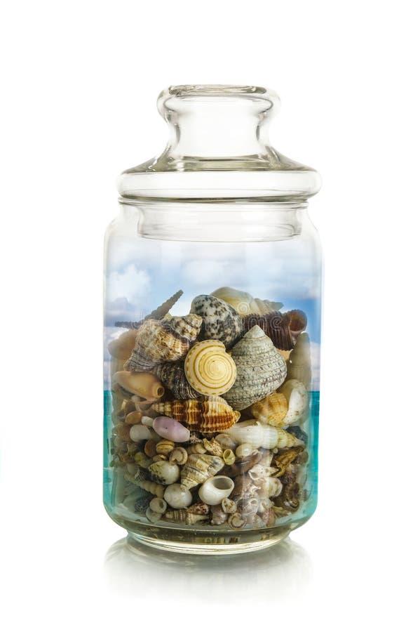Overzeese shells in kruik royalty-vrije stock fotografie