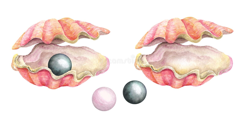 Overzeese shells met parels De illustratie van de waterverf royalty-vrije illustratie