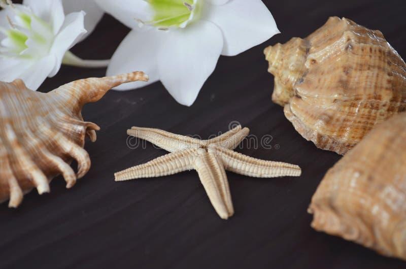 Overzeese shells op een donkere achtergrond royalty-vrije stock fotografie