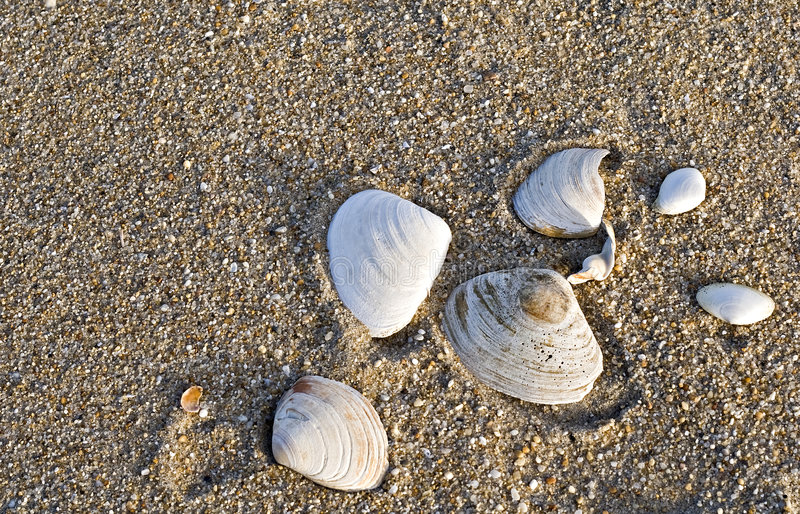 Overzeese Shells op het Strand stock foto's