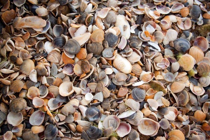 Overzeese shells op het strand stock fotografie