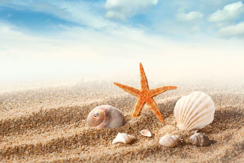 Overzeese shells op het zand royalty-vrije stock foto