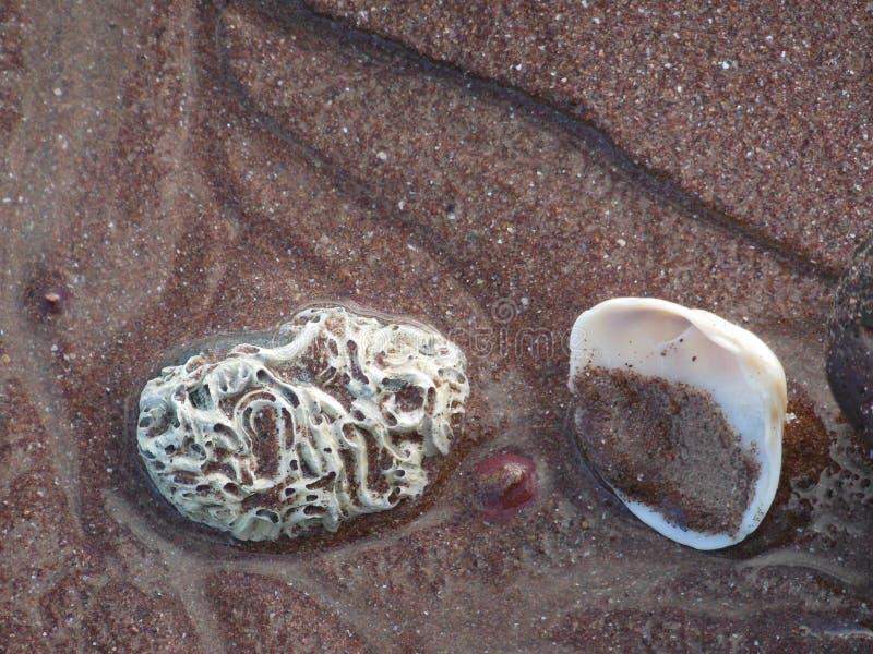 Overzeese shells op het zand stock fotografie