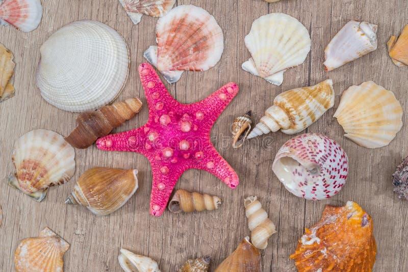 Overzeese shells op houten achtergrond hoogste mening, royalty-vrije stock foto