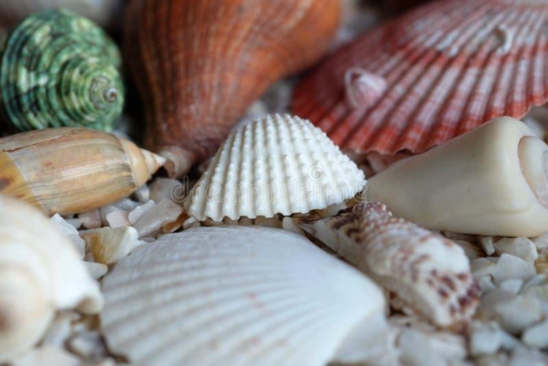 Overzeese shells op rotsachtergrond stock foto's