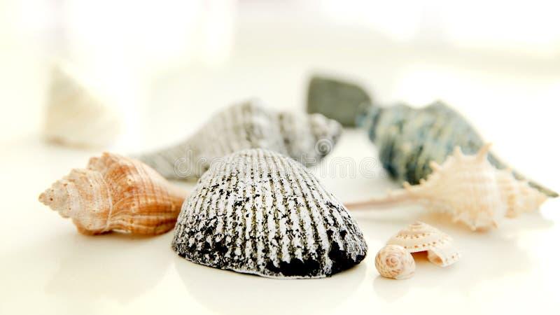Overzeese shells op witte backgrond royalty-vrije stock afbeelding