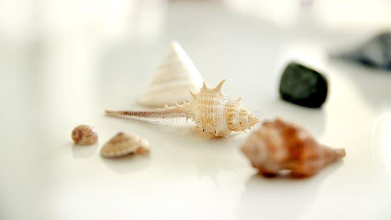 Overzeese shells op witte backgrond royalty-vrije stock foto