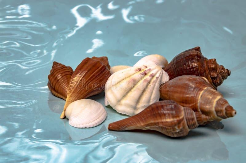 Overzeese shells reis aan de overzeese droom en rust close-up royalty-vrije stock afbeelding