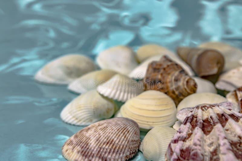 Overzeese shells reis aan de overzeese droom en rust close-up stock foto