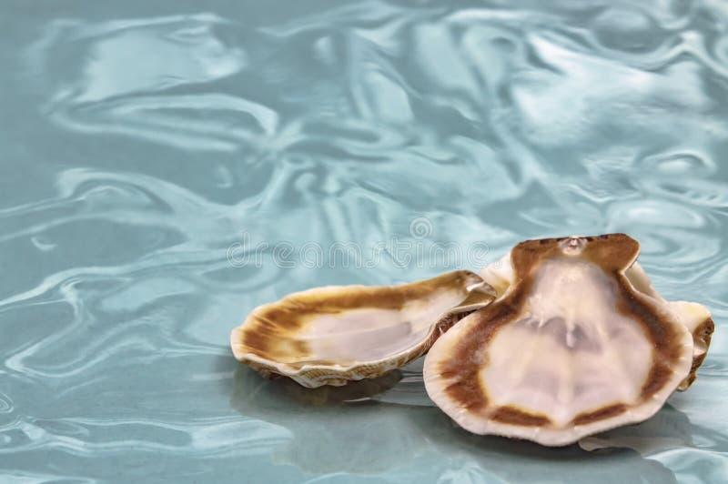 Overzeese shells reis aan de overzeese droom en rust close-up stock afbeelding