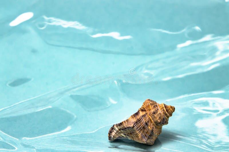 Overzeese shells reis aan de overzeese droom en rust close-up royalty-vrije stock foto's