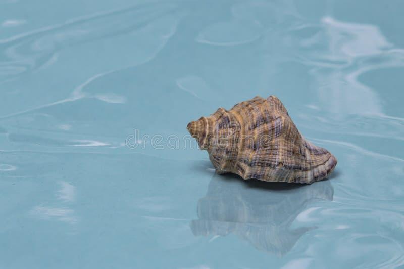 Overzeese shells reis aan overzeese droom en rust dichte omhooggaand stock fotografie