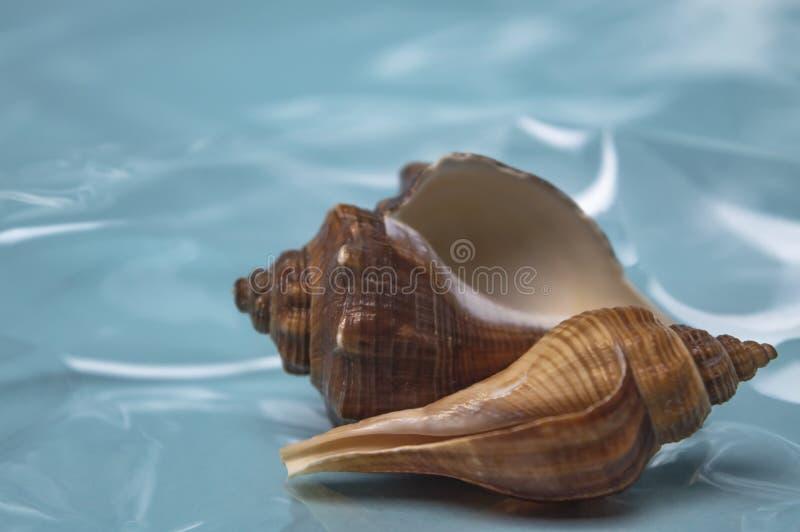 Overzeese shells reis aan overzeese droom en rust dichte omhooggaand royalty-vrije stock afbeeldingen