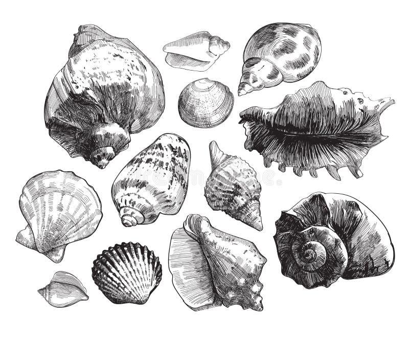 Overzeese shells schetsreeks royalty-vrije illustratie