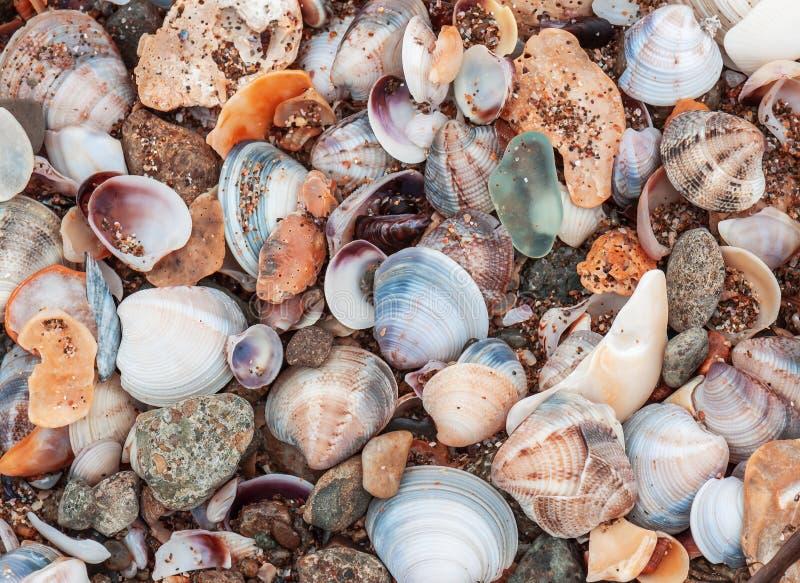 Overzeese shells textuur royalty-vrije stock afbeelding