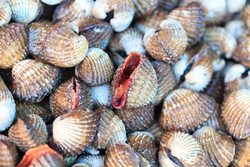 Overzeese shells tweekleppige schelpdieren in Thailand stock afbeelding