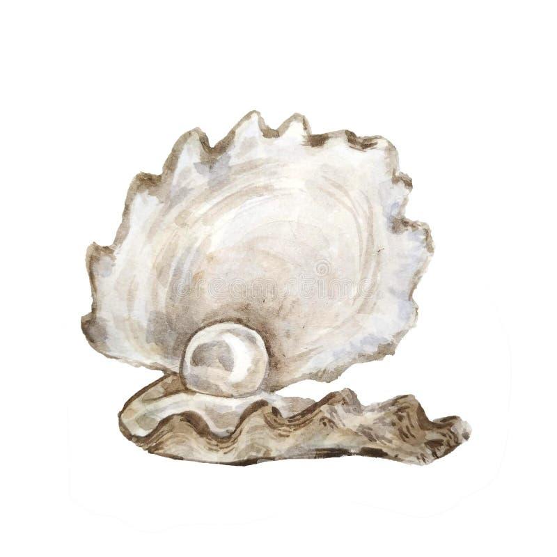 Overzeese shells witte Illustraties Marien ontwerp Hand het getrokken waterverf schilderen op witte achtergrond N'art -n'art-ure royalty-vrije illustratie
