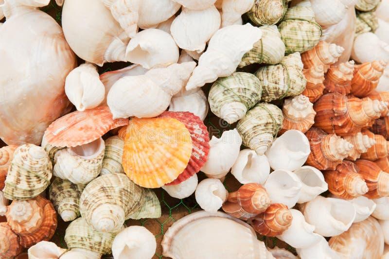 Overzeese shells/zeeschelpen - strandtextuur royalty-vrije stock afbeeldingen