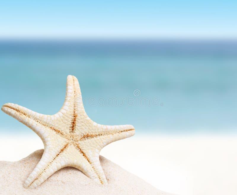 Overzeese ster in zand royalty-vrije stock foto
