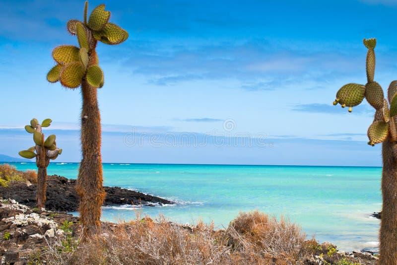 Overzeese van de Galapagos mening stock fotografie