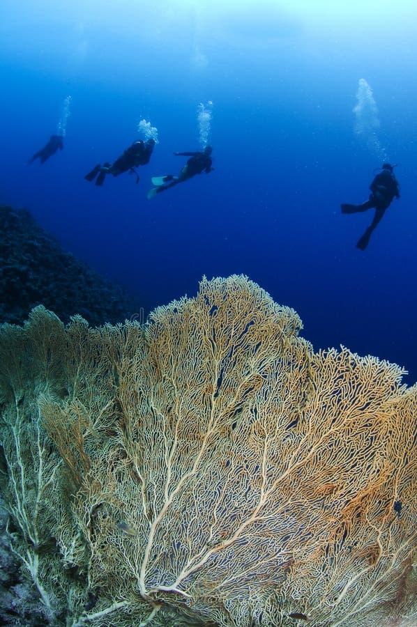 Overzeese van Gorgonian ventilator en scuba-duikers royalty-vrije stock foto