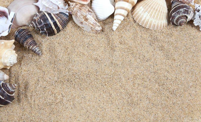 Overzeese van Nice shells op het zandige strand stock foto's