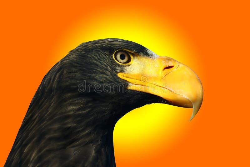 Overzeese van Steller adelaar vector illustratie