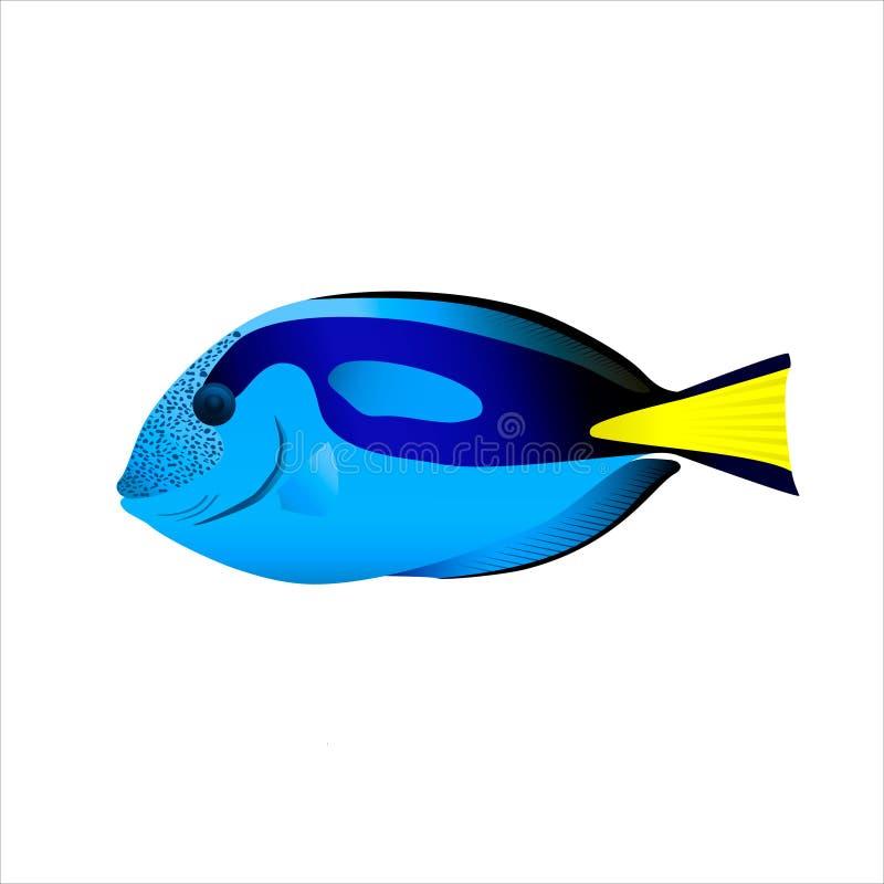 Overzeese vissen Hepatus royalty-vrije stock foto