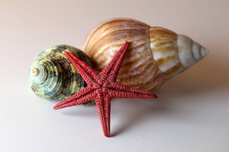 Overzeese Weekdiershells en een Zeester op een Lijst royalty-vrije stock afbeelding