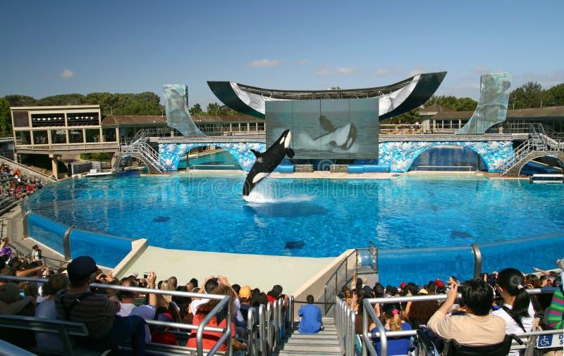 Overzeese Wereld San Diego - het Overtreden van de Orka! royalty-vrije stock foto