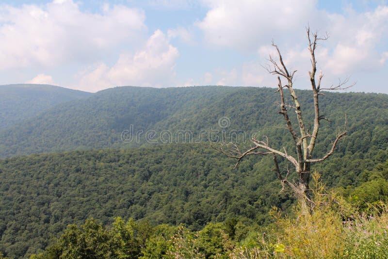 Overzicht van het Nationale Park van Shenandoah royalty-vrije stock afbeelding