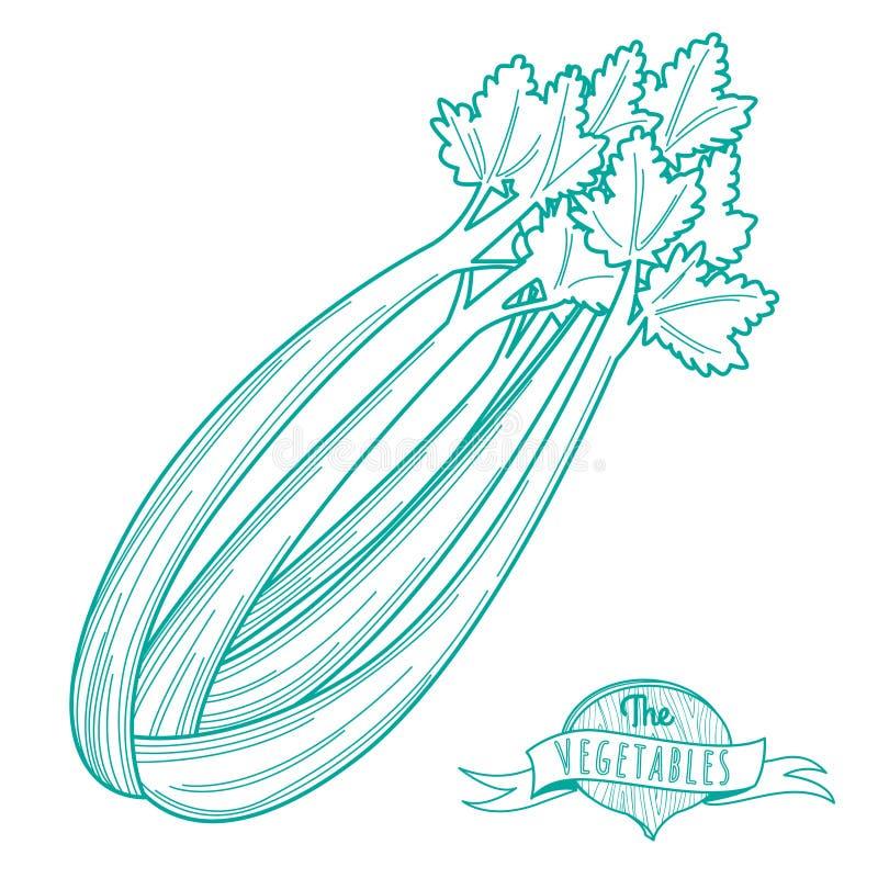 Overzichtshand getrokken schets van selderie (vlakke stijl, dunne lijn) royalty-vrije illustratie