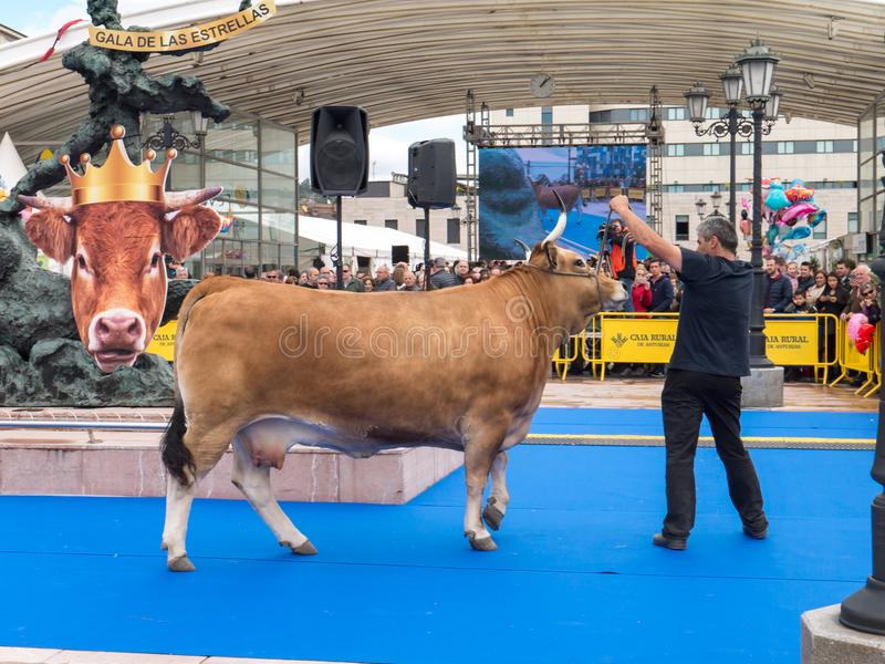 OVIEDO, SPAGNA - 12 maggio 2018: Il galà delle stelle dei ows e dei tori del ¡ di Ð mostra a fotografia stock libera da diritti