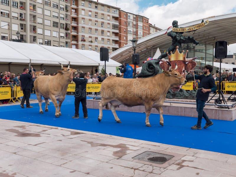OVIEDO, SPAGNA - 12 maggio 2018: Il meglio nella sua razza intimorisce la parata alla t immagini stock libere da diritti