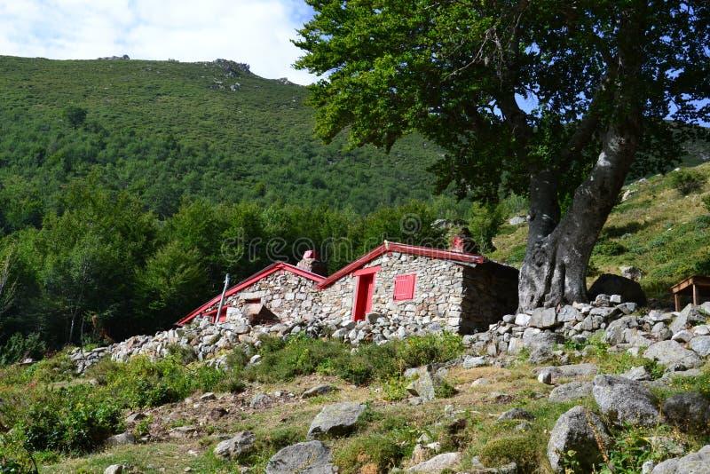 Ovile - Corsica fotografie stock libere da diritti