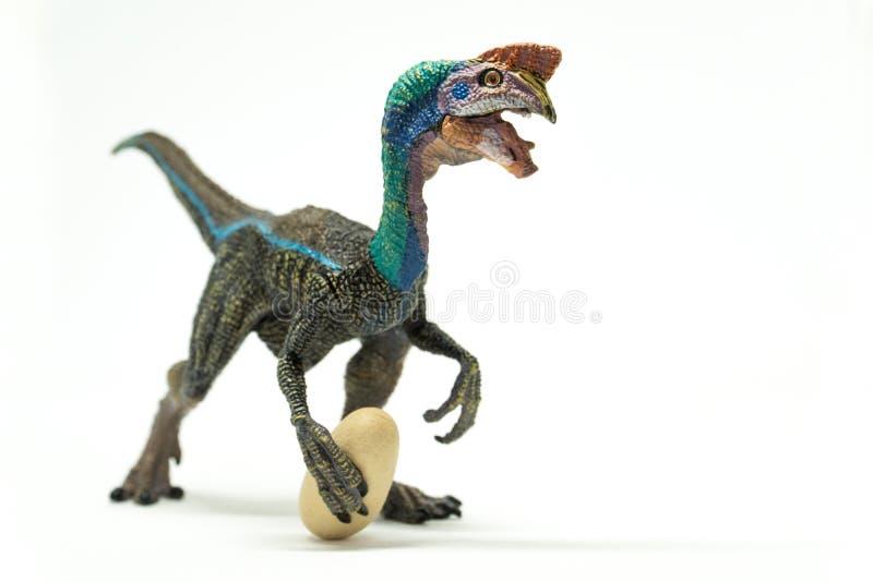 Oviraptor с украденным яичком на белой предпосылке стоковые фотографии rf