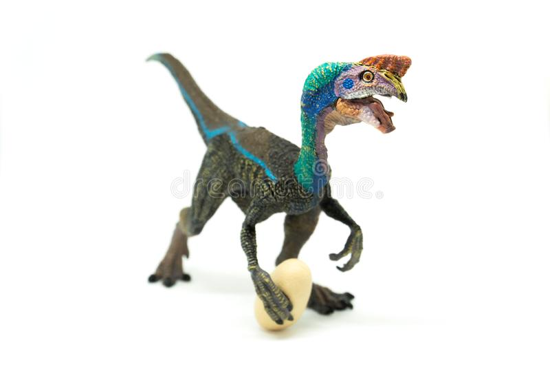 Oviraptor с украденным яичком на белой предпосылке стоковая фотография