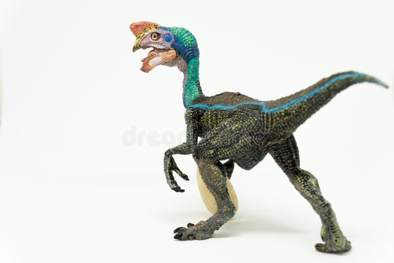 Oviraptor с украденным яичком на белой предпосылке стоковое фото rf