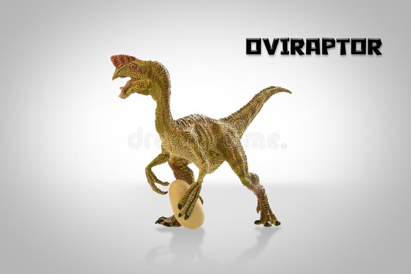 Oviraptor στοκ φωτογραφίες με δικαίωμα ελεύθερης χρήσης