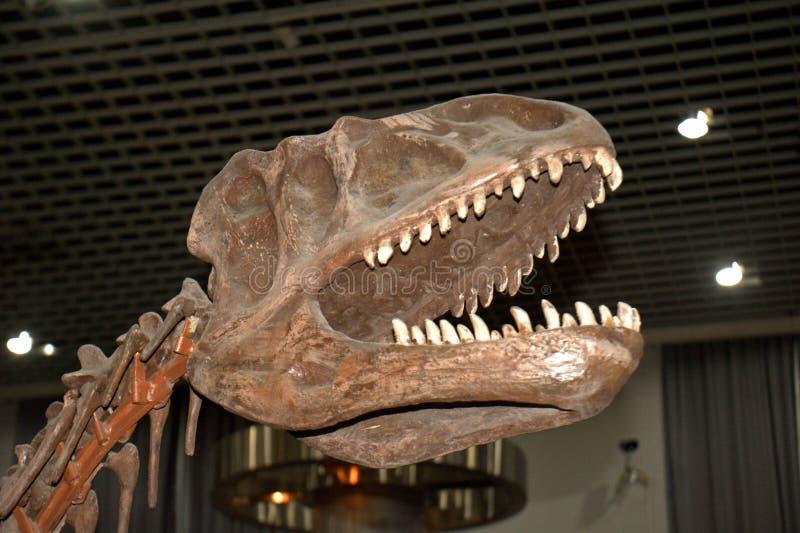 Oviraptor, Peking, China stock fotografie